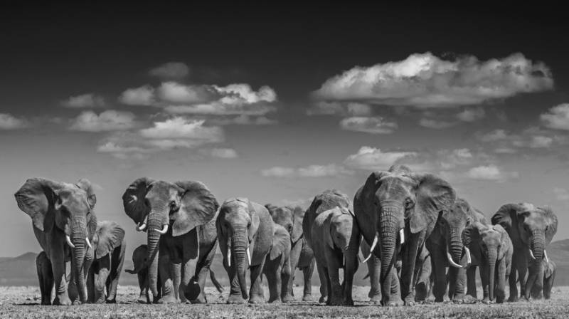 David Yarrow - Elephant uprising