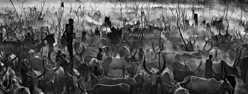 David Yarrow - Mankind 2 B&W