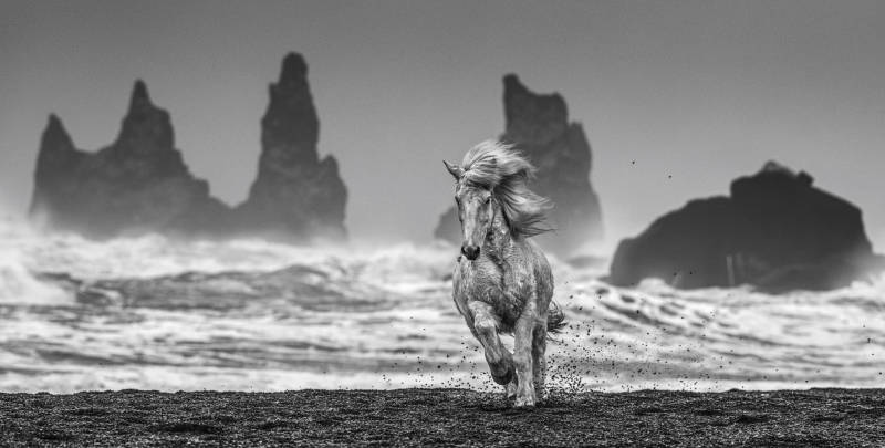 David Yarrow - White Horses