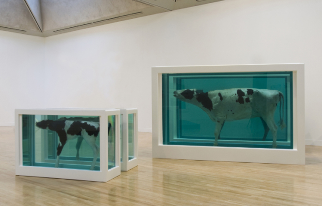 Mother and Child Divided, utstillingskopi fra 2007, original fra 1993 i Astrup Fearnley Museum of Modern Art, i glass, malt st�l, st�l, silikon, akryl, ku, kalv og formalinl�sning. Foto: � Damien Hirst and Science Ltd. All rights reserved. DACS 2012.