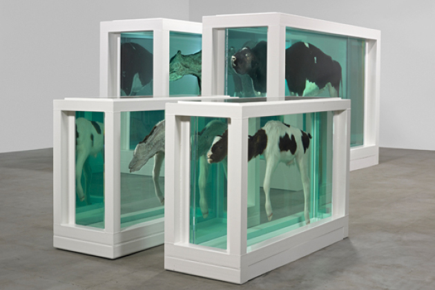 Damien Hirst, Mother and Child Divided, 1993, stål, GRP kompositter, glass, silicon, ku, kalv, formalinløsning og to tanker, 190 x 322,5 x 109 cm. Foto: Prudence Cuming Associates / © Damien Hirst and Science Ltd. / All rights reserved, DACS 2011.
