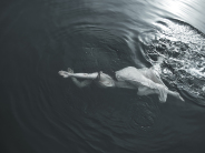 Christina B�rding - Under Water I