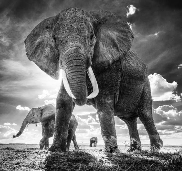 David Yarrow - The Untouchables