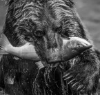 David Yarrow - Primeval