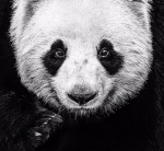 David Yarrow - Kung Fu Panda