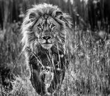 David Yarrow - Full Nine Yards