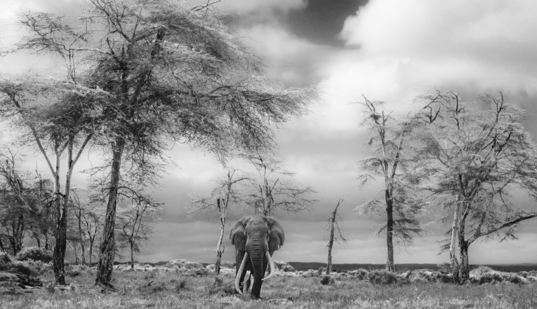 David Yarrow - The fairytale
