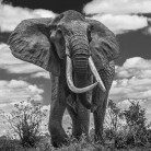 David Yarrow - Tsavo east