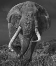 David Yarrow - Bunga bunga