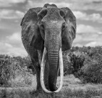 David Yarrow - The final few