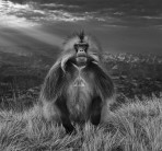 David Yarrow - Members only