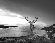 David Yarrow - Over the sea to the Skye