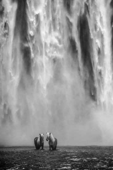 David Yarrow - The dream