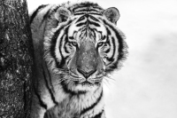 David Yarrow - Good morning Siberia