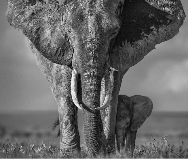 David Yarrow - The walk of life
