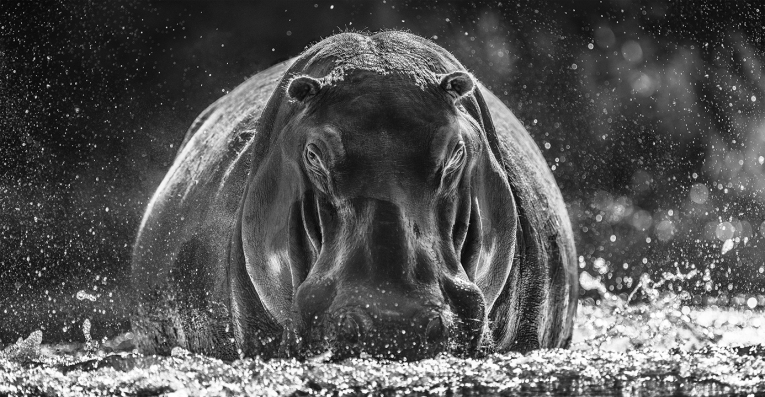 David Yarrow - Dexter