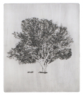 Kirsti Aasheim - The old oak tree