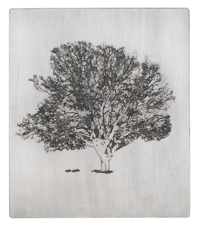 Kirsti Aasheim - The old oak tree (black)