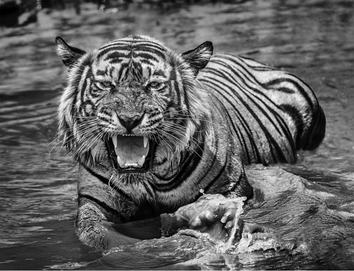 David Yarrow - Risky business