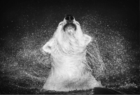 David Yarrow - Diamonds in the sky