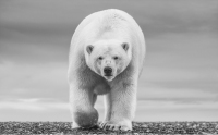 David Yarrow - The North Slope
