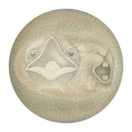 Toril Rygh - Shields 5