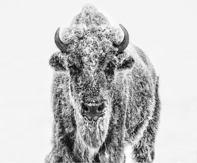 David Yarrow - Ice age