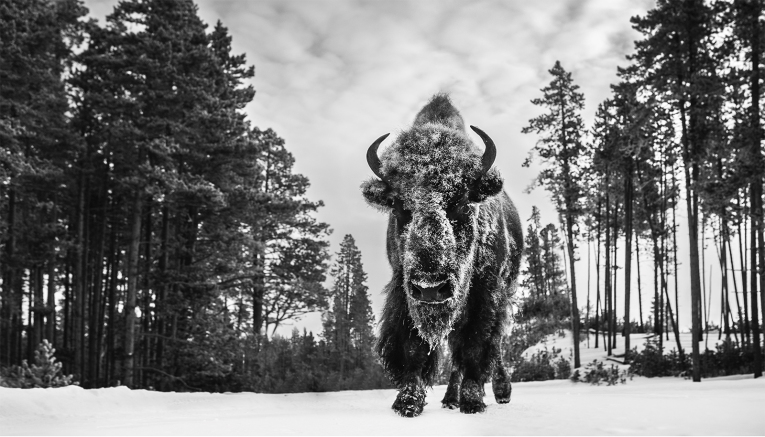 David Yarrow - Forest Grump