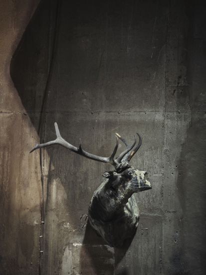 Christian Houge - Elk on concrete