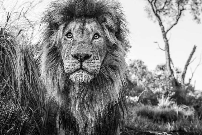 David Yarrow - Kingdom