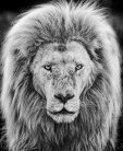 David Yarrow - Gandalf