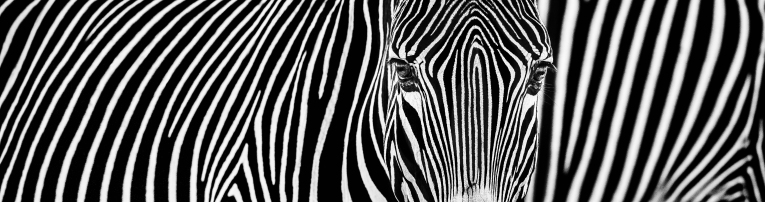 David Yarrow - Parallel Lines