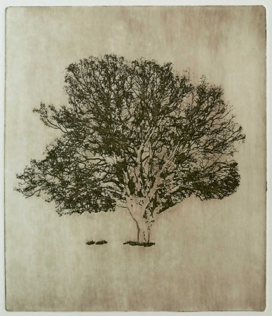 Kirsti Aasheim - The old oak tree (brown)