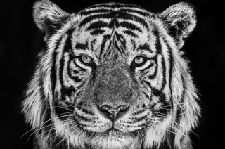 david-yarrow-sep-2019