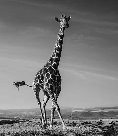 David Yarrow - Tiny dancer