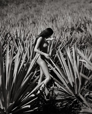 George Holz - Woman, Garden of Agave, Mexico 70x55 | edt. 5
