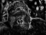 David Yarrow - The Governor