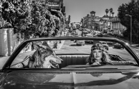David Yarrow - Chateau Marmont