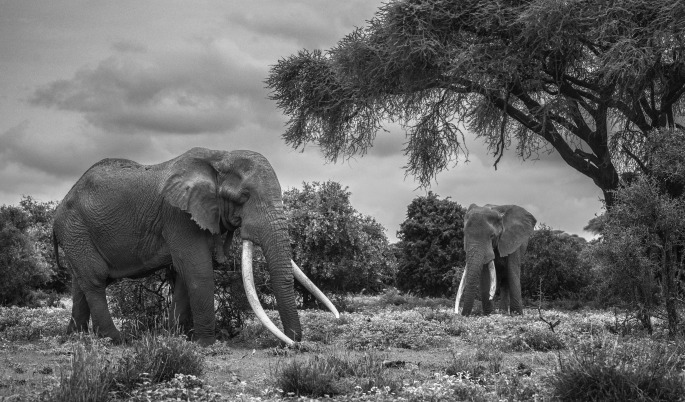 David Yarrow - David Yarrow Photography (bok) + bilde