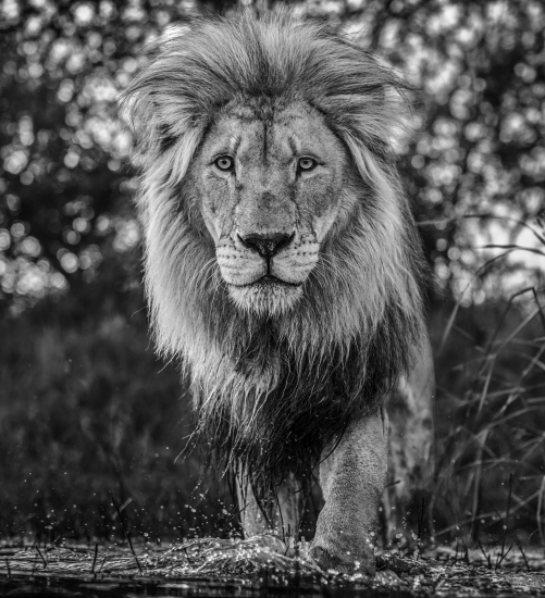 David Yarrow - Basic instinct