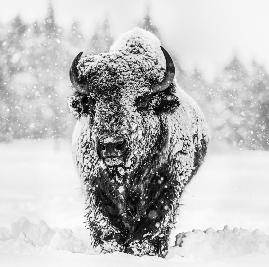 David Yarrow - Winter's Coming