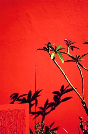 Signe Christine Urdal -Red wall