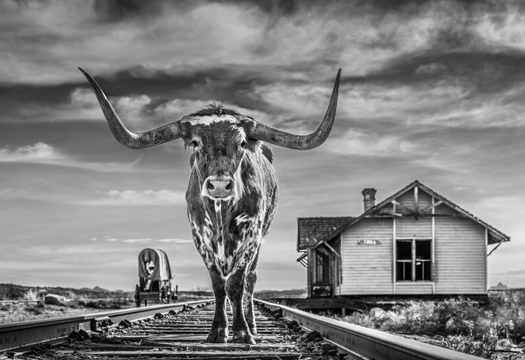 David Yarrow - The end of the line
