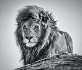 David Yarrow - The Cure
