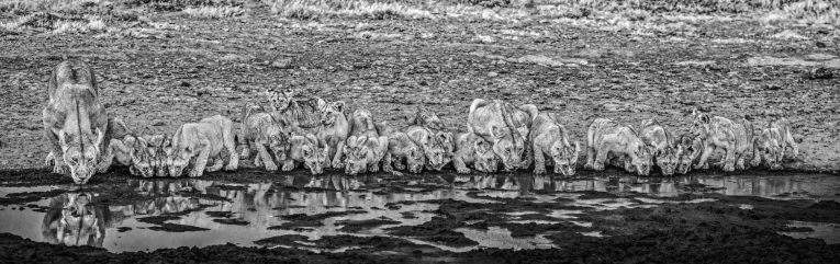 David Yarrow - One for the road