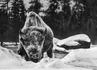 David Yarrow - Buffalo soldier